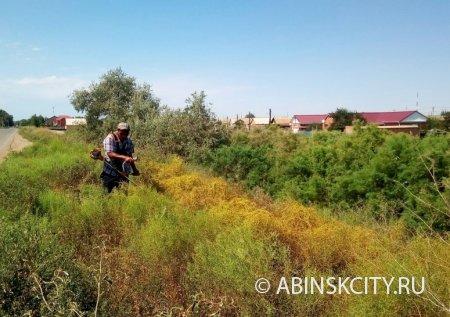 Повилика - опасный карантинный сорняк